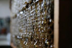 Termelői méz begyűjtésre készen